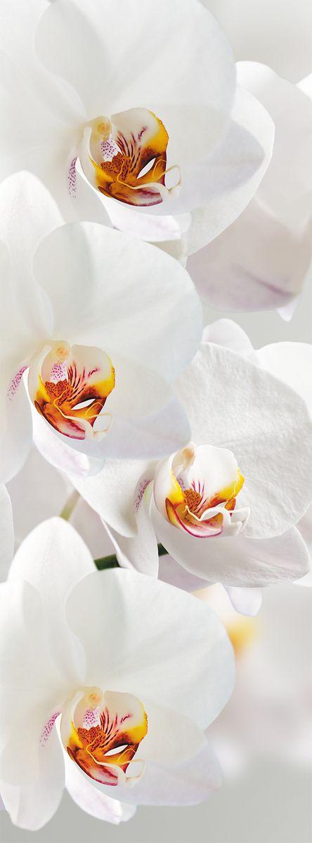 Фотообои Milan Ветка орхидеи, текстурные, 100 х 270 см. M 123m 123Виниловые обои горячего тиснения на флизелиновой основе MILAN — дизайнерская коллекция фотообоев и фотопанно европейского качества, созданная на основе последних тенденций в мире интерьерной моды. Еще вчера эти тренды демонстрировались на подиумах