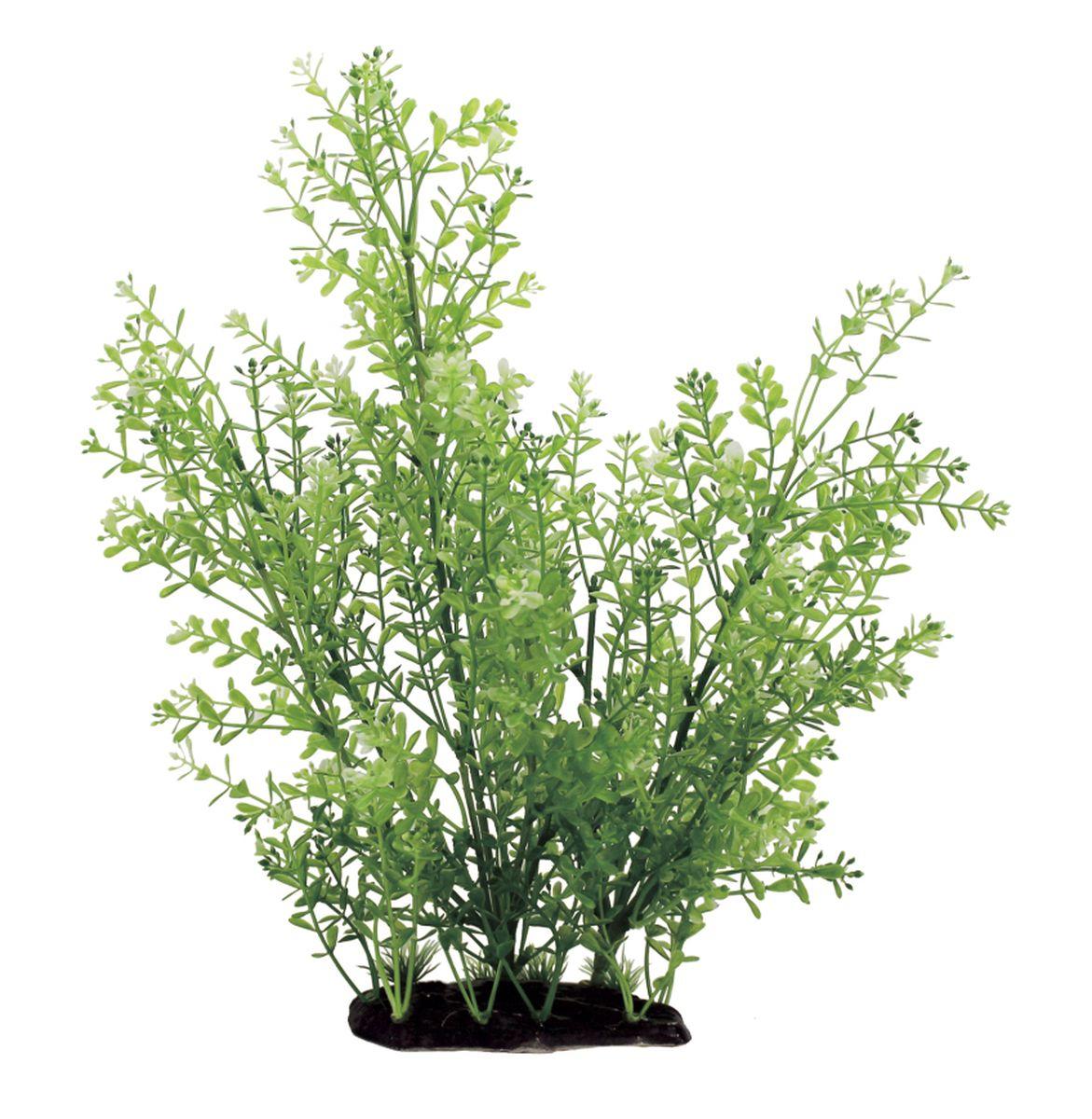 Растение для аквариума ArtUniq Ротала, высота 35 см. ART-1130103ART-1130103Композиция из искусственных растений ArtUniq превосходно украсит и оживит аквариум.Растения - это важная часть любой композиции, они помогут вдохнуть жизнь в ландшафт любого аквариума или террариума. А их сходствос природными порадует даже самых взыскательных ценителей.