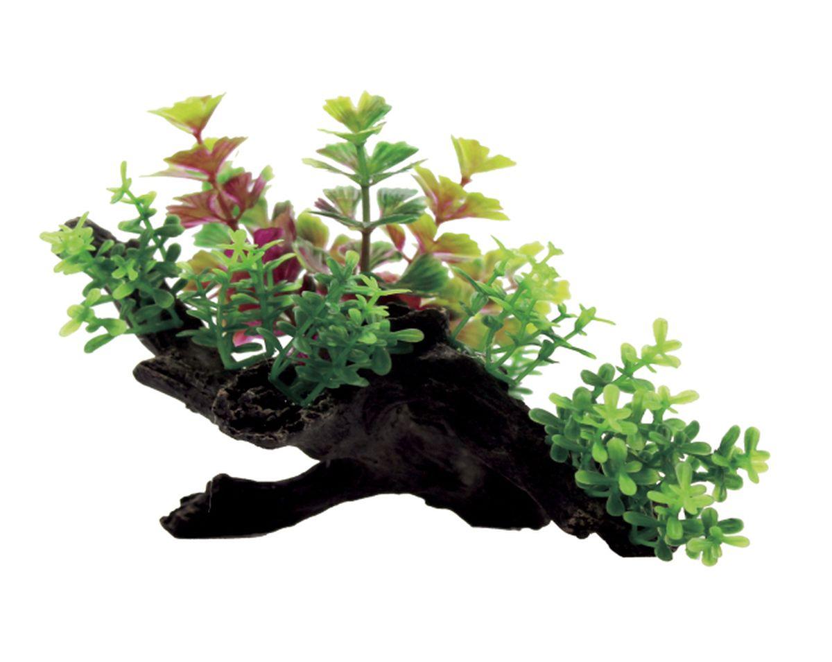 Композиция из растений для аквариума ArtUniq Кариота на коряге, 15 x 11 x 10 смART-1130409Композиция из растений для аквариума ArtUniq Кариота на коряге, 15 x 11 x 10 см