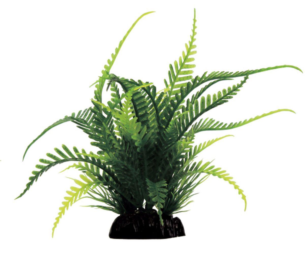 Растение для аквариума ArtUniq Папоротник, 15 x 8 x 15 смART-1130903Композиция из искусственных растений ArtUniq превосходно украсит и оживит аквариум.Растения - это важная часть любой композиции, они помогут вдохнуть жизнь в ландшафт любого аквариума или террариума. А их сходствос природными порадует даже самых взыскательных ценителей.