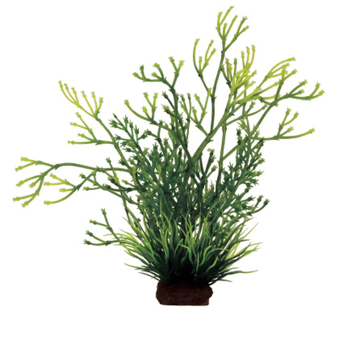 Композиция из растений для аквариума ArtUniq Блестянка, 8 x 7 x 14 смART-1130910ArtUniq Блестянка - прекрасная композиция из искусственных растений. Искусственные декорации ArtUniq обладают одним оченьглавным свойством - они долговечны и, соответственно, сохраняют свой внешний вид и всегда выглядят свежими и красивыми. А их сходство сприродными порадует даже самых взыскательных ценителей. Коллекция ArtPlants - широчайшая палитра искусственных растений, которые помогут вдохнуть жизнь в ландшафт любого аквариума илитеррариума своей яркой, сочной цветовой палитрой.