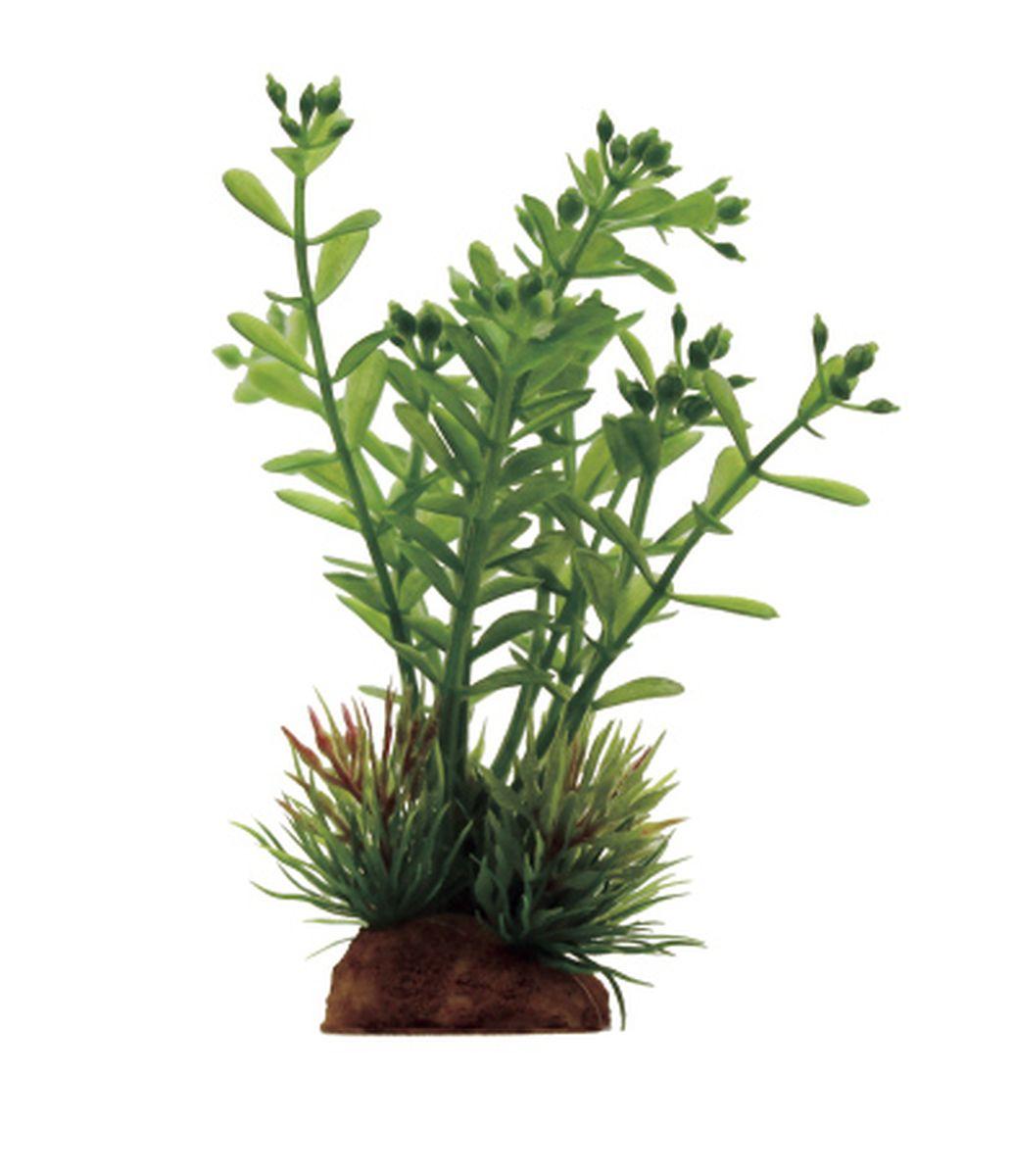 Композиция из растений для аквариума ArtUniq Ротала, 8 x 7 x 14 смART-1130914Композиция из искусственных растений ArtUniq превосходно украсит и оживит аквариум.Растения - это важная часть любой композиции, они помогут вдохнуть жизнь в ландшафт любого аквариума или террариума. Композиция является точной копией природного растения.