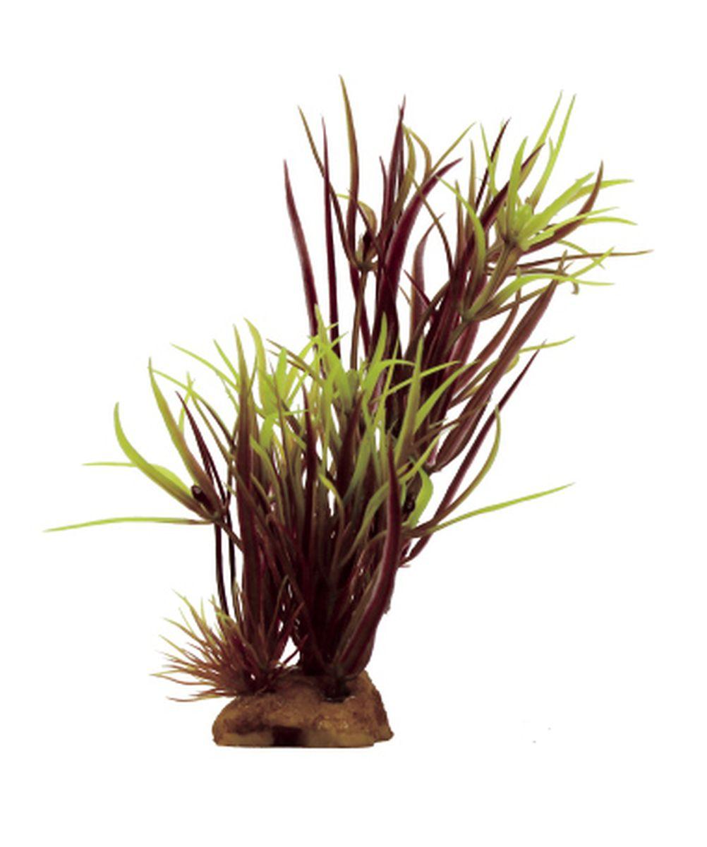Композиция из растений для аквариума ArtUniq Лагаросифон мадагаскарский красный, 8 x 7 x 14 смART-1130916Композиция из искусственных растений ArtUniq превосходно украсит и оживит аквариум.Растения - это важная часть любой композиции, они помогут вдохнуть жизнь в ландшафт любого аквариума или террариума.Композиция является точной копией природного растения.