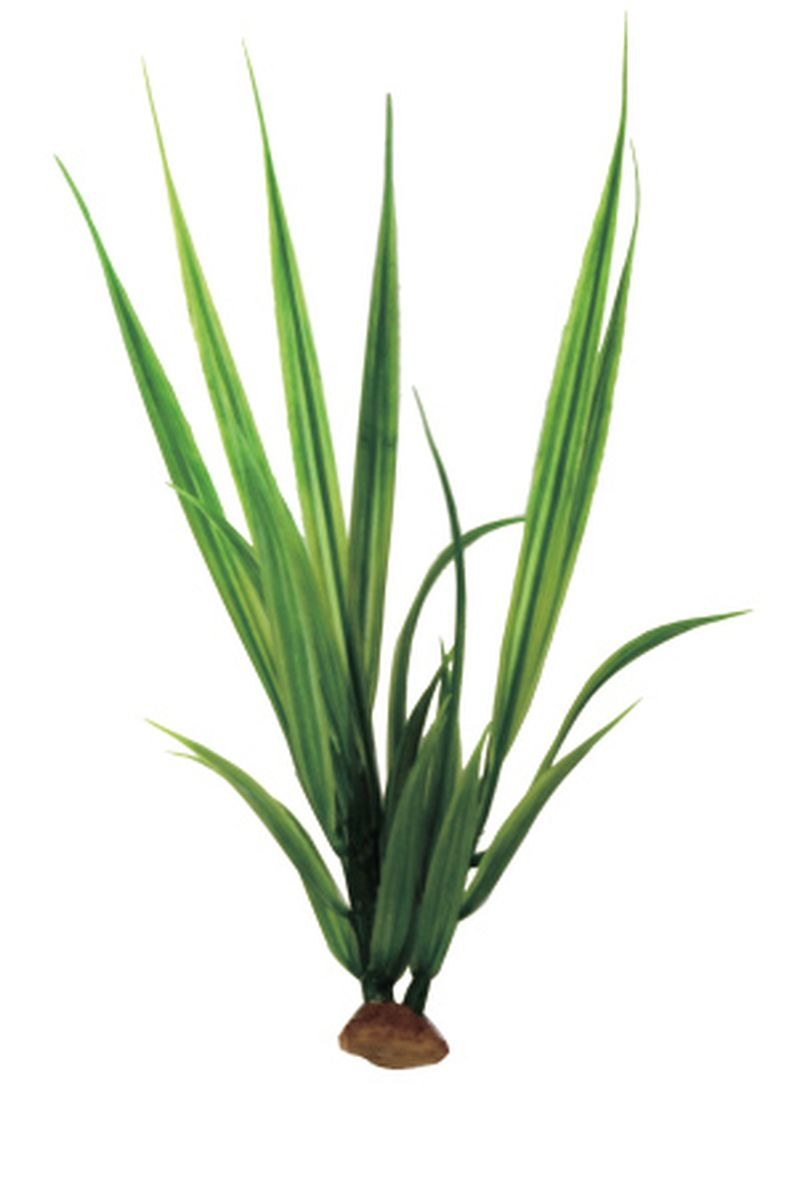 Растение для аквариума ArtUniq Акорус, 6 x 6 x 20 смART-1140511Композиция из искусственных растений ArtUniq превосходно украсит и оживит аквариум.Растения - это важная часть любой композиции, они помогут вдохнуть жизнь в ландшафт любого аквариума или террариума. А их сходствос природными порадует даже самых взыскательных ценителей.