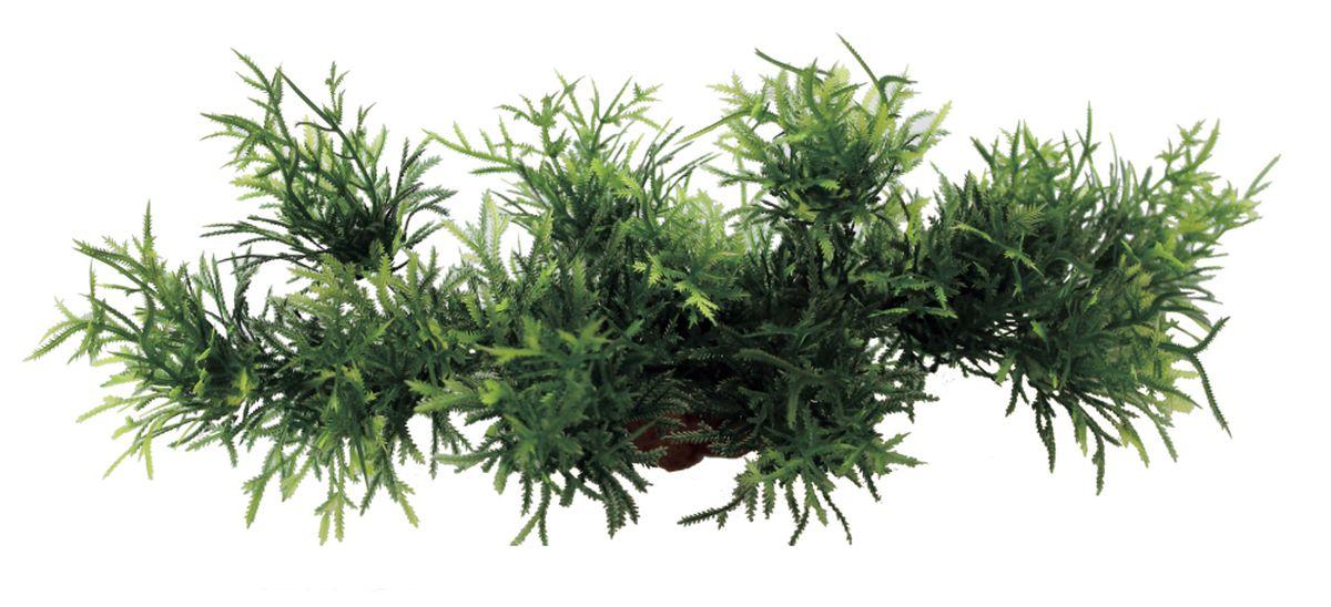 Композиция из растений для аквариума ArtUniq Мох ключевой, 24 х 8 х 9 смART-1180103Композиция из искусственных растений ArtUniq превосходно украсит и оживит аквариум.Растения - это важная часть любой композиции, они помогут вдохнуть жизнь в ландшафт любого аквариума или террариума.Композиция является точной копией природного растения.