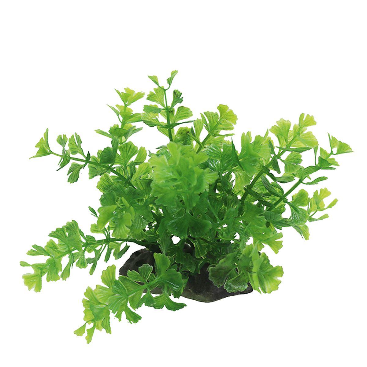 Растение для аквариума ArtUniq Кариота зеленая, высота 10-12 смART-1192109Композиция из искусственных растений ArtUniq превосходно украсит и оживит аквариум.Растения - это важная часть любой композиции, они помогут вдохнуть жизнь в ландшафт любого аквариума или террариума. А их сходствос природными порадует даже самых взыскательных ценителей.