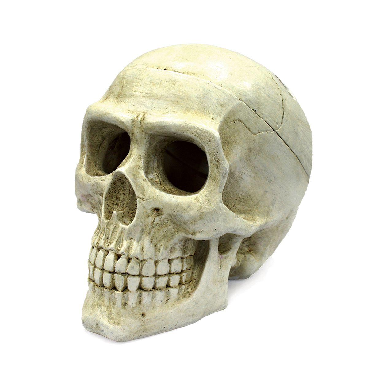 Декорация для аквариума ArtUniq Большой череп, 20 x 12,7 x 15,8 см декорация для аквариума artuniq пористый камень 20 5 x 10 5 x 18 8 см