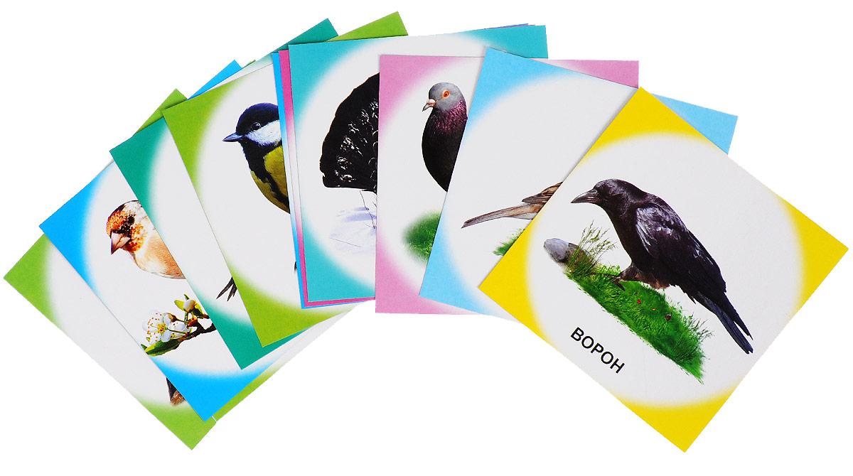 Птицы зимующие (набор из 12 карточек) т в цветкова зимующие птицы раздаточные картинки набор из 16 карточек
