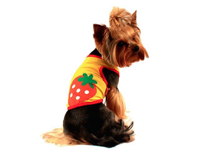 Майка для собак Каскад Клубнички, унисекс, цвет: желтый, красный. Размер M52000571Майка для собак Каскад выполнена из трикотажа. Майка без рукавов не ограничивает свободу движений, поэтому собачка будет чувствовать себя в ней комфортно. Спинка дополнена изображением клубники. Модная и невероятно удобная трикотажная майка защитит вашего питомца от пыли и насекомых на улице, согреет дома или на даче. Длина по спинке: 25 см. Одежда для собак: нужна ли она и как её выбрать. Статья OZON Гид