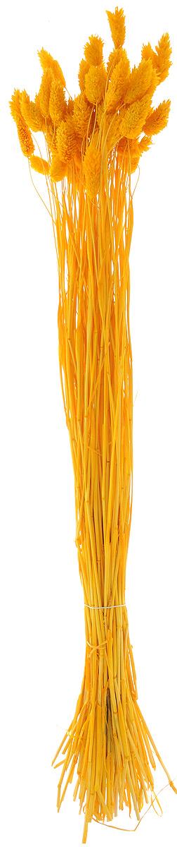 Украшение декоративное Lovemark Пучок. Фалярис, цвет: желтый, длина 77 см6009_желтыйКаждое время года по-своему прекрасно. Однако, как часто поздней осенью и долгой зимой нам не хватает тепла, ярких весенних красок, которые дарят цветы. Этот недостаток можно восполнить благодаря композициям из сухоцветов.Букет из сухих цветов способен сохранять свою красоту на протяжении всего года, а уход за ним минимален. Очень удобны сухоцветы и для использования их людьми с повышенной аллергической реакцией на пыльцу растений и различные резкие запахи. Подчеркните свой неповторимый вкус в интерьере с помощью нежной композиции из сухих цветов. Длина украшения: 77 см.