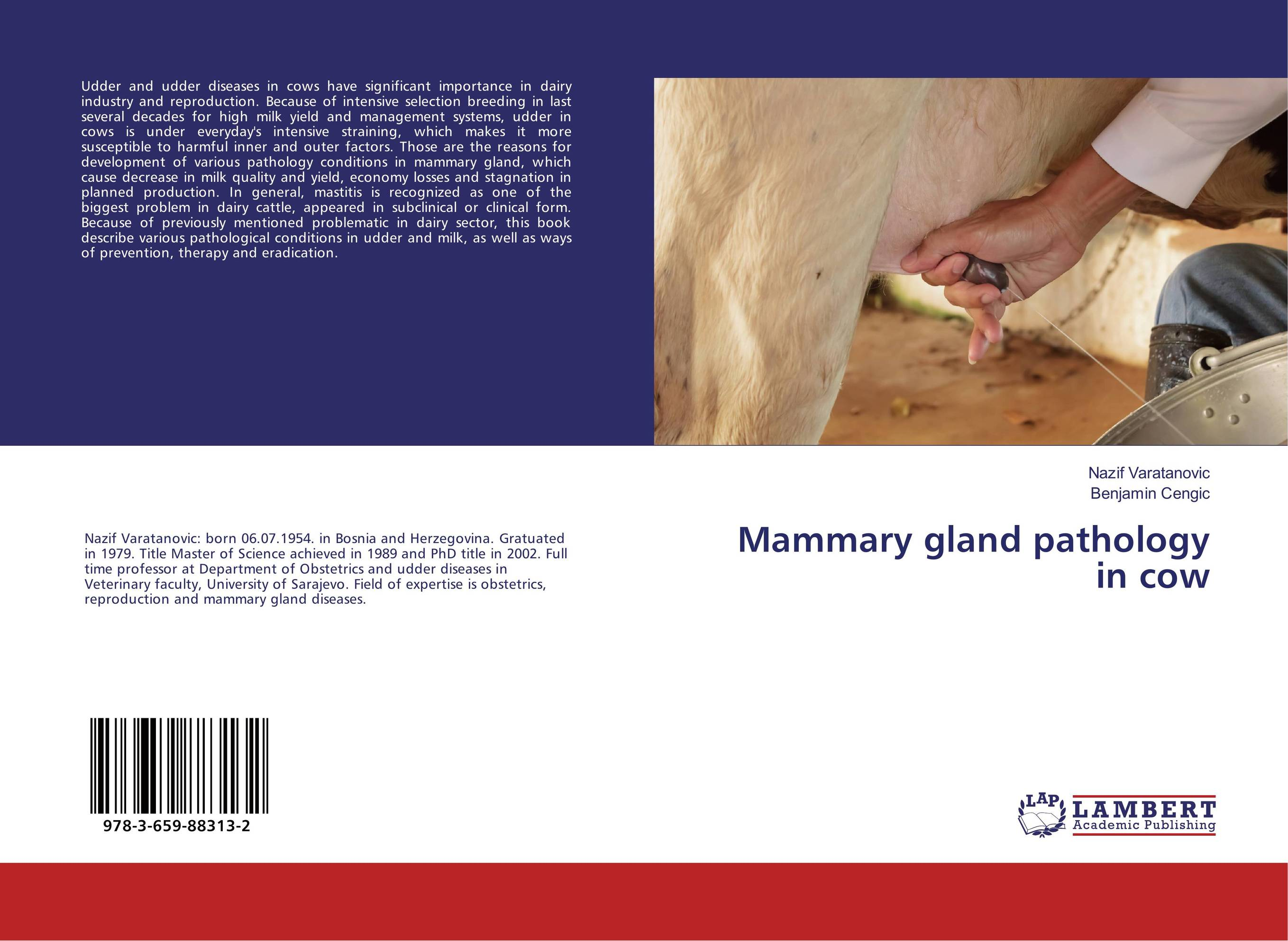 Mammary gland pathology in cow claw disorders in dairy cows under smallholder zero grazing units