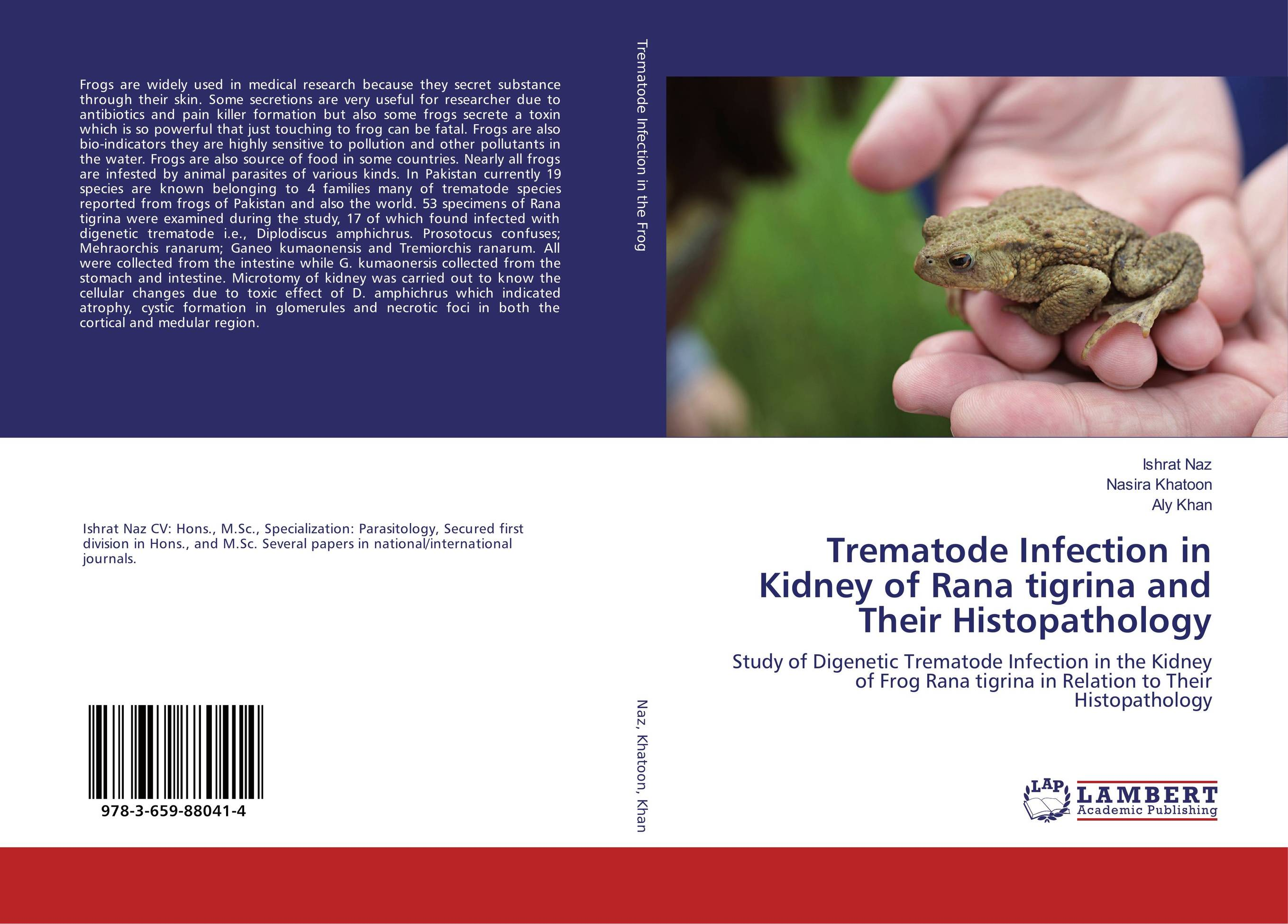 Trematode Infection in Kidney of Rana tigrina and Their Histopathology aristophanes the frogs