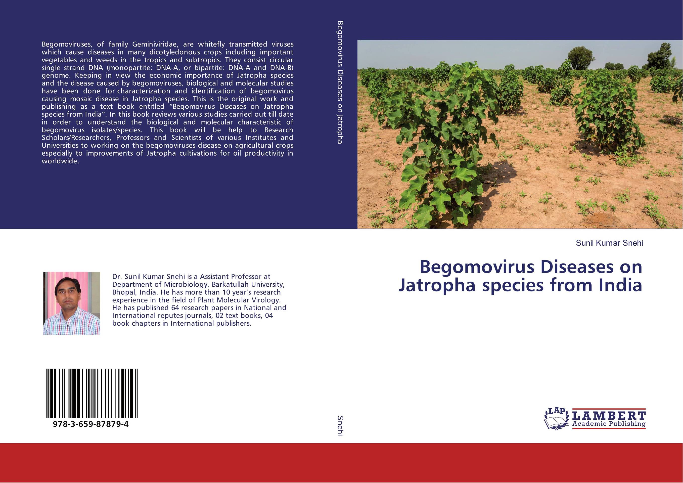 Begomovirus Diseases on Jatropha species from India anatomical studies on species of subfamily stachyoideae lamiaceae