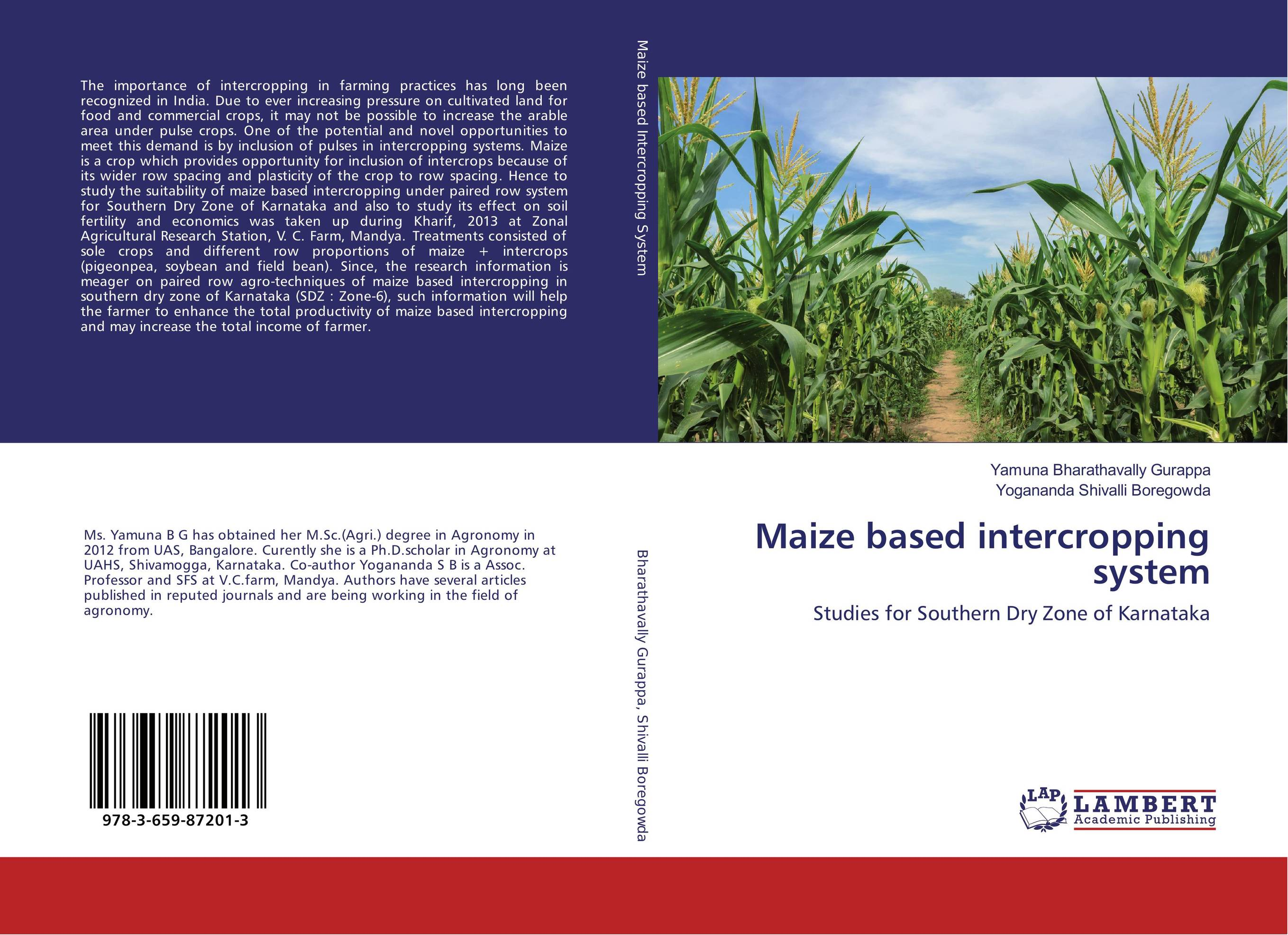 Maize based intercropping system