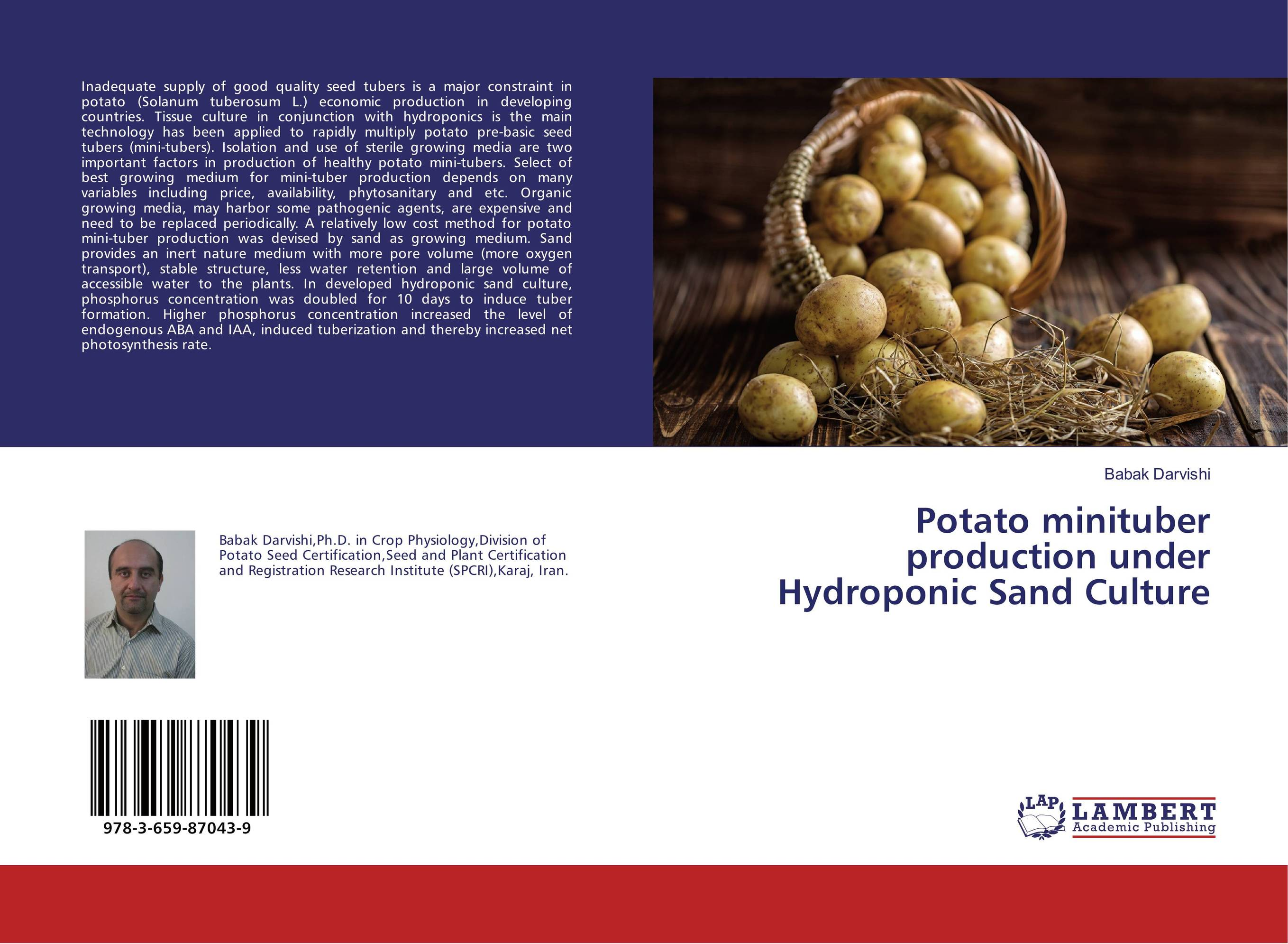 Potato minituber production under Hydroponic Sand Culture process technology for production of potato based snack