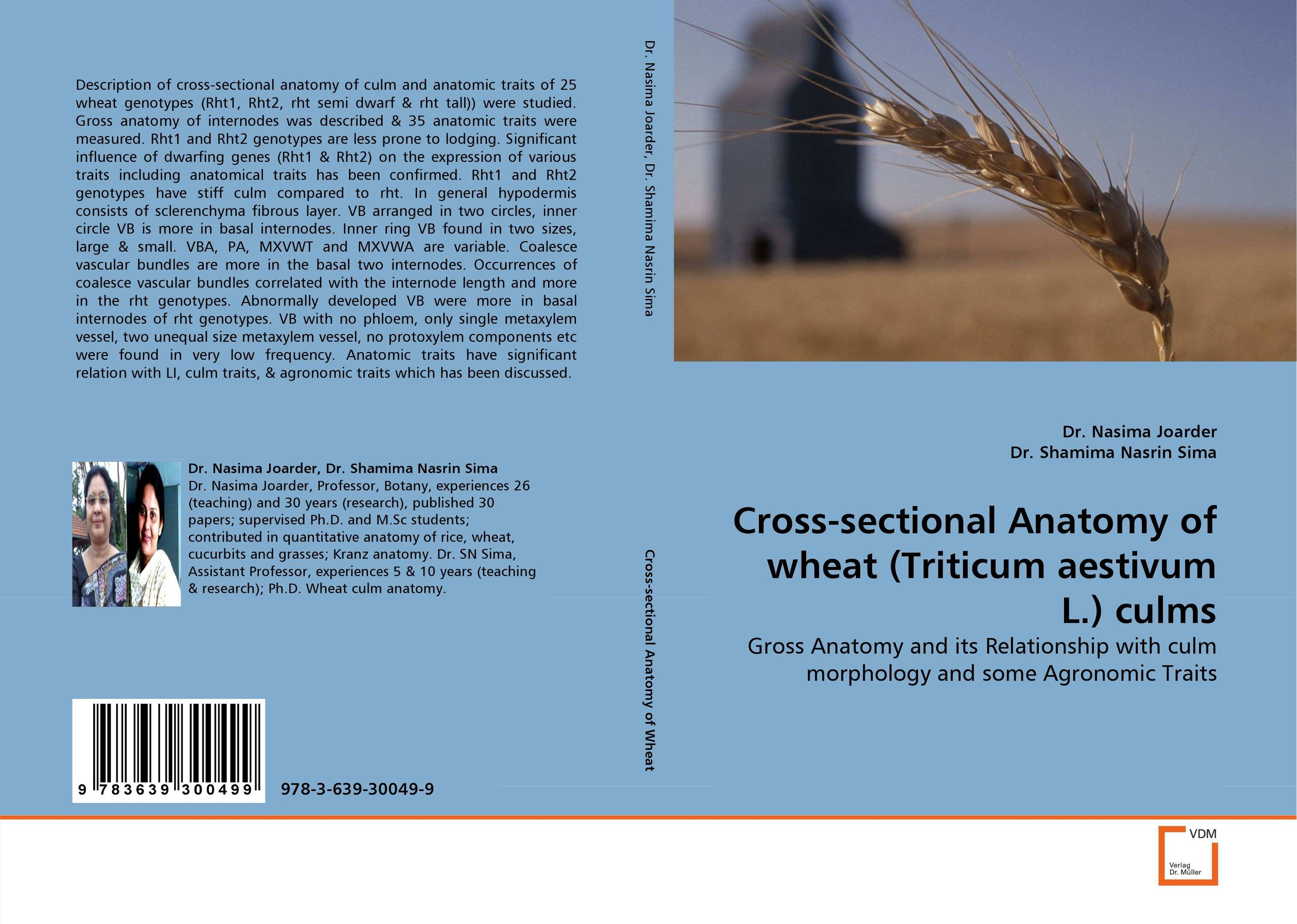 Cross-sectional Anatomy of wheat (Triticum aestivum L.) culms anatomy of a disappearance