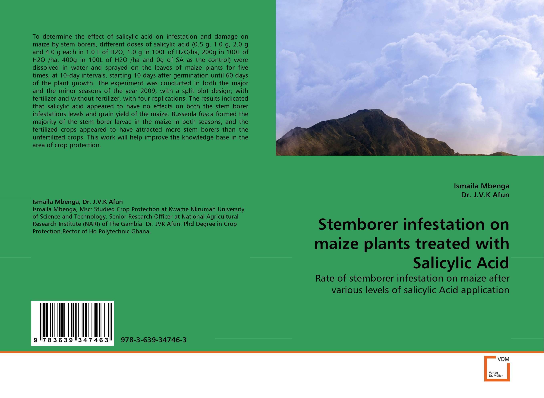 Stemborer infestation on maize plants treated with Salicylic Acid 2 oz 60 ml salicylic acid 15