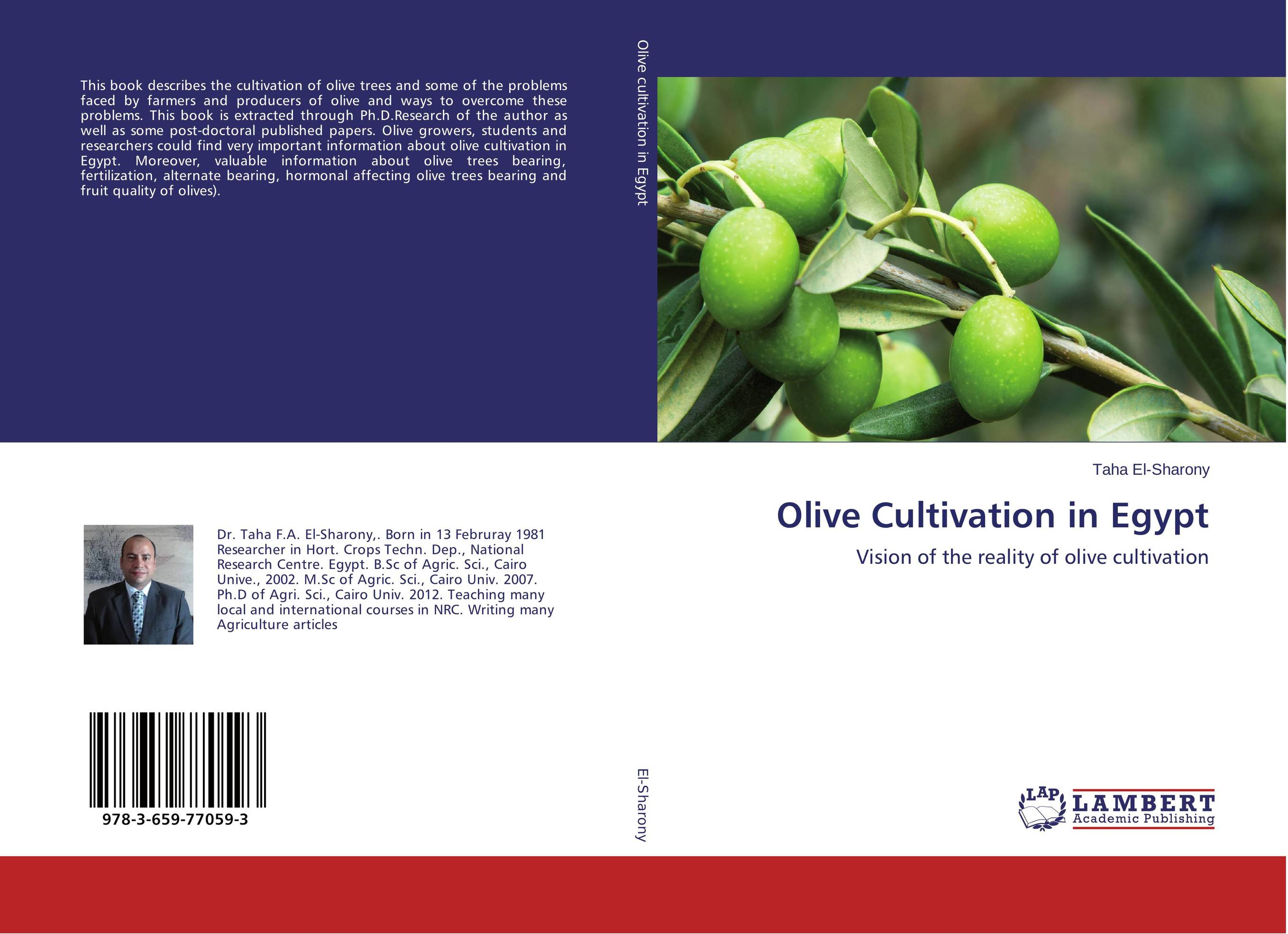 Olive Cultivation in Egypt