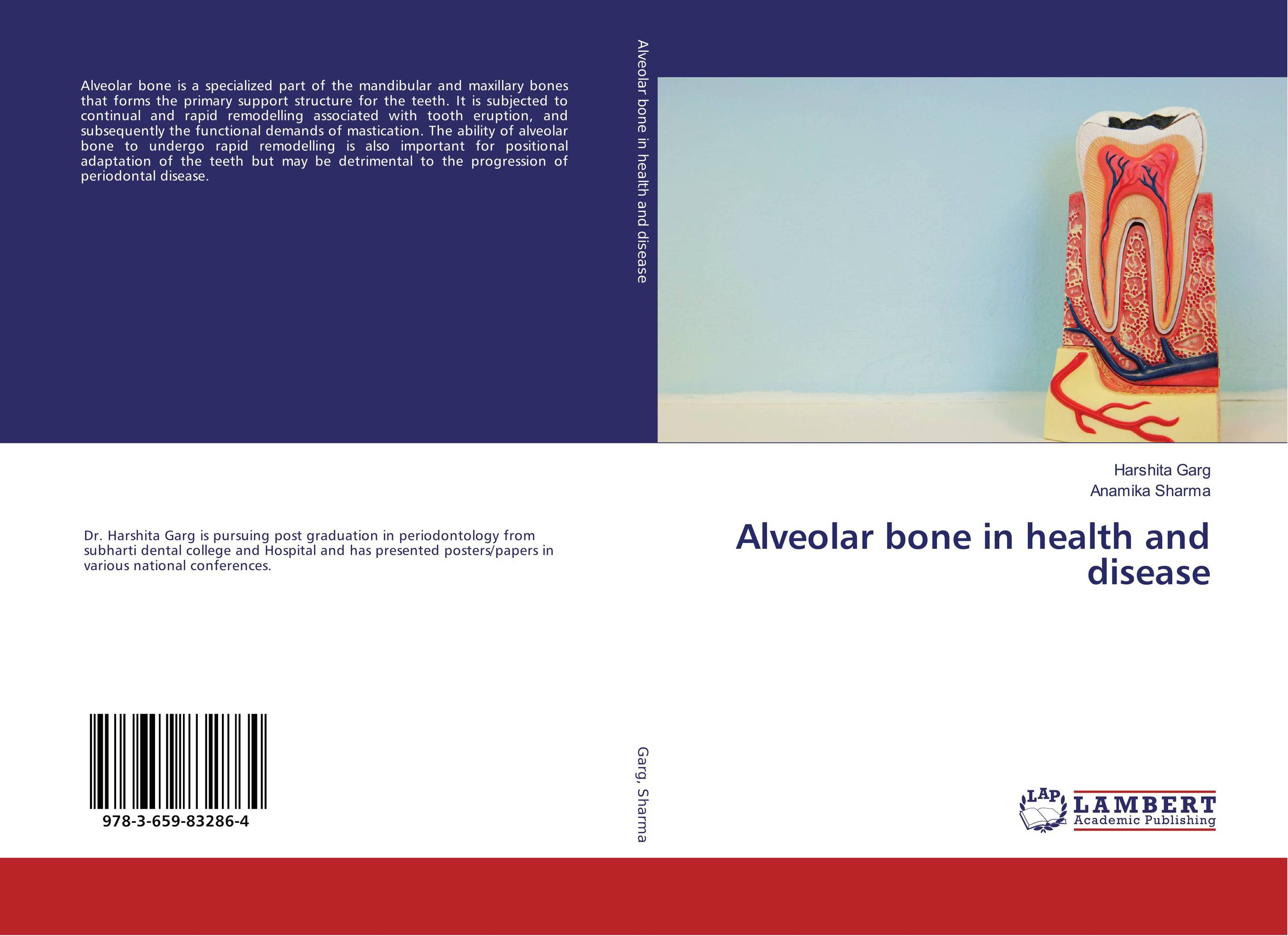Alveolar bone in health and disease factors associated with bone health in young adults