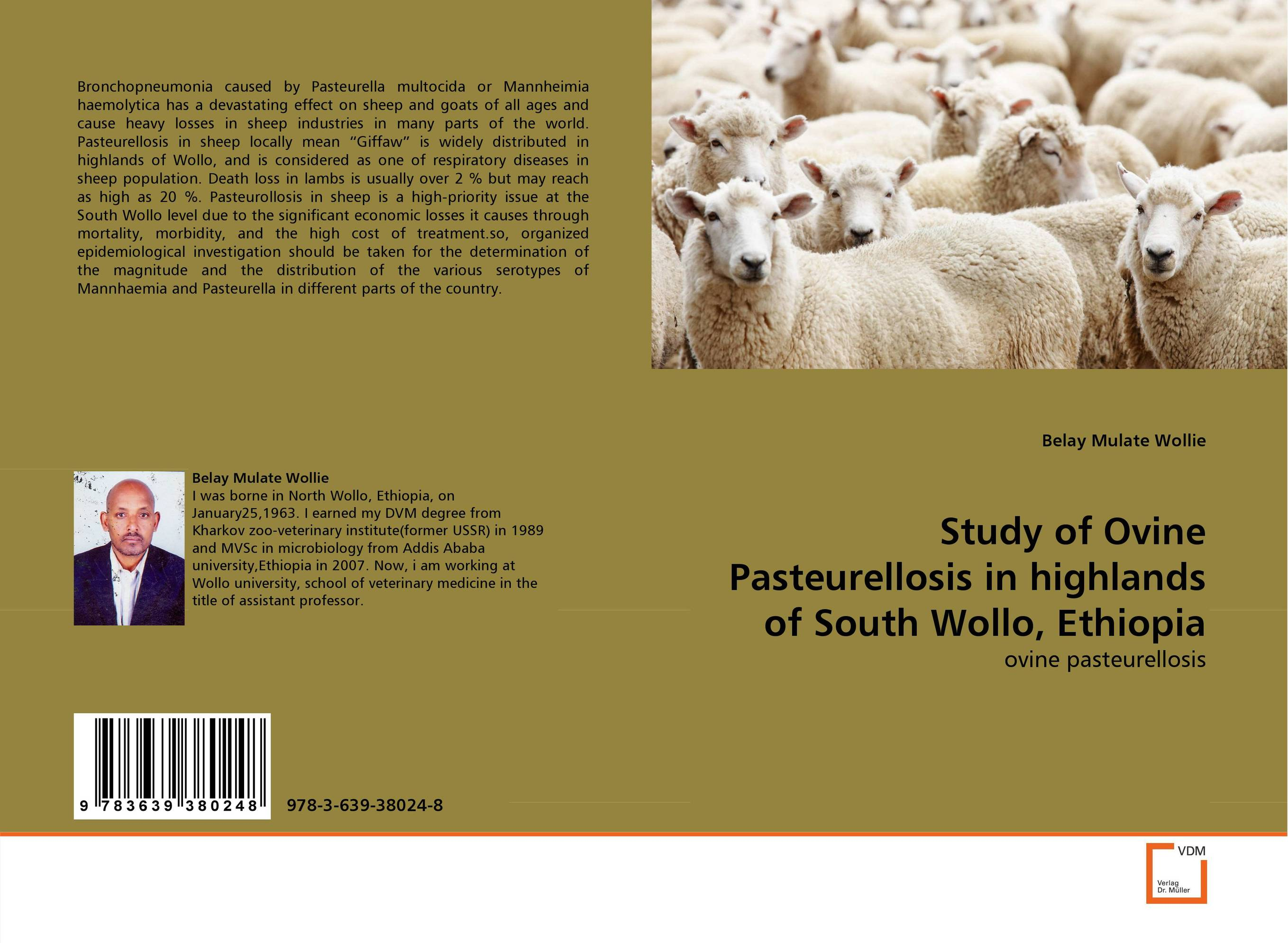 Study of Ovine Pasteurellosis in highlands of South Wollo, Ethiopia