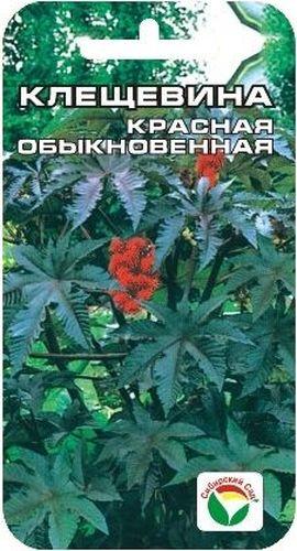 Семена Сибирский сад Клещевина красная. Обыкновенная, 5 штBP-00000229Это интересное высокорослое растение с крупными листьями можно смело назвать сибирской пальмой, достигающей за один год огромных размеров Декоративное растение из семейства Мальвовые высотой до 1,5-2 м. Ценится за крупные красивые листья темно-красной окраски. Теплолюбива, светолюбива и довольно засухоустойчива. Предпочитает участки с плодородной и хорошо обработанной почвой. Выращивается рассадным способом. Посев проводят в начале апреля в горшочки по 2-3 шт. Всходы появляются через 10-12 дней. Рассаду высаживают в открытый грунт в начале июня на расстоянии 50-60 см. Используется в оформлении участка.Для подкормки используют минеральные комплексные удобрения. Для ускорения процесса всхожести семян, оздоровления растений, улучшения завязываемости плодов рекомендуется пользоваться специально разработанными стимуляторами роста и развития растений.