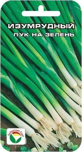 Семена Сибирский сад Лук на зелень. Изумрудный, 1 гBP-00000244Высокопродуктивный среднеспелый сорт лука на зелень. Выращивается в однолетней культуре из семян. Листовая розетка прямостоячая, мощная, высотой до 50 см. Листья нежные, сочные, слабоострого вкуса. Отбеленная часть короткая, не образует луковицу. Листья нежные, сочные, слабоострого вкуса. Сорт устойчив к низким температурам и стрелкованию. Рекомендуется для употребления в свежих летних салатах и для рыночных продаж. Посев весной в открытый грунт на глубину 1-1,5 см. Требует полива и подкормки в процессе вегетации.