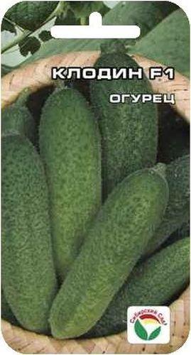 Семена Сибирский сад Огурец. Клодин, 7 штBP-00000300Очень ранний высокопродуктивный улучшенный гибрид огурца-корнишона. Не требует опыления пчелами. Вступает в плодоношение через 38-39 дней после всходов. При достаточном питании формирует по 6-7 плодов в каждом узле. Плоды длиной 8-10 см. мелкобугорчатые, с очень маленькой семенной камерой, плотной консистенции, без горечи, хрустящие и вкусные даже после переработки. Растение мощное, довольно открытое, что облегчает уход и уборку. Благодаря особой структуре плети очень легко производить сбор урожая без существенных повреждений вегетативной массы при непрерывной многократной ручной уборке. Рекомендуется для выращивания в теплицах и в открытом грунте вертикальным и горизонтальным способом. Гибрид жаростойкий, устойчив к кладоспориозу, относительно устойчив к вирусу мозаики огурца и мучнистой росе.Посев в марте-мае на глубину 2-3 см. Семена не замачивать! Посевы следует укрыть пленкой. Возделывают по схеме 70x30 см. Уход заключается в прополке, рыхлении, поливе и подкормках. Полив следует осуществлять после захода солнца теплой водой под корень. За время вегетации проводят 2-3 подкормки.
