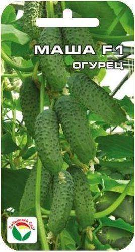 Семена Сибирский сад Огурец. Маша, 5 штBP-00000306Великолепный суперранний самоопыляемый гибрид с пучковым формированием плодов в узле. Растение мощное, сильнорослое, чрезвычайно урожайное. При достаточном питании и уходе формирует до 6-7 плодов в одном узле. Зеленцы однородные, цилиндрической формы, темно-зеленые, крупнобугорчатые, плотной консистенции, генетически без горечи, Идеальны для всех видов переработки и для употребления в свежем виде. Гибрид устойчив к кладоспориозу. мучнистой росе и вирусу огуречной мозаики. Отличается повышенной устойчивостью к пониженным температурам Выращивается в стеклянных и пленочных теплицах и в открытом грунте.Огурцы выращивают, высевая семенами в грунт или через рассаду. Рассаду высаживают в грунт, когда минует угроза весенних заморозков. Семенами огурец высевают в прогретую почву на глубину 1,5-2 см. Посевы укрывают. Оптимальная температура почвы для прорастания семян 20-23°С. Платность посадки 3 растения на 1 м2. Растение можно выращивать горизонтальным и вертикальным способом, привязывая к шпалере. Полив и подкормка органическими минеральными удобрениями в процессе вегетации. Сбор урожая через каждые 3-5 дней.Для ускорения процесса всхожести семян, оздоровления растений, улучшения завязываемости плодов рекомендуется пользоваться специально разработанными стимуляторами роста и развития растений.