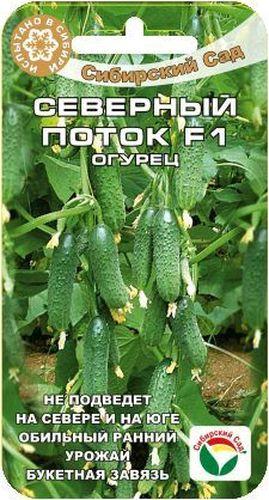 Семена Сибирский сад Огурец. Северный поток F1 огурец всем на зависть f1 купить
