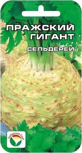 Семена Сибирский сад Сельдерей. Пражский гигант, 0,5 гBP-00000422Высокоурожайный ароматичный сорт. Корнеплоды крупные, реповидной формы. Мякоть белая, нежная. Вкусовые качества хорошие.Выращивают рассадным способом. Для получения крепкой здоровой рассады за ней необходим тщательный уход - рыхление,полив,подкормка. Рассаду высаживают в грунт в возрасте 60-80 дней в середине-конце мая по схеме 35х40 см. Корнеплоды убирают при наступлении заморозков.Для ускорения процесса всхожести семян, оздоровления растений, улучшения завязываемости плодов рекомендуется использовать специально разработанные стимуляторы роста и развития растений.