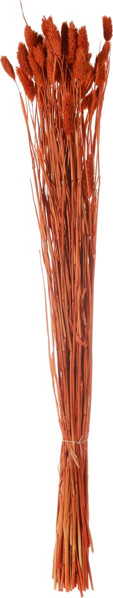 Украшение декоративное Lovemark Пучок. Фалярис, цвет: оранжевый, длина 77 см6009_оранжевыйКаждое время года по-своему прекрасно. Однако, как часто поздней осенью и долгой зимой нам не хватает тепла, ярких весенних красок, которые дарят цветы. Этот недостаток можно восполнить благодаря композициям из сухоцветов.Букет из сухих цветов Lovemark Пучок. Фалярис способен сохранять свою красоту на протяжении всего года, а уход за ним минимален. Очень удобны сухоцветы и для использования их людьми с повышенной аллергической реакцией на пыльцу растений и различные резкие запахи. Подчеркните свой неповторимый вкус в интерьере с помощью нежной композиции из сухих цветов. Длина украшения: 77 см.