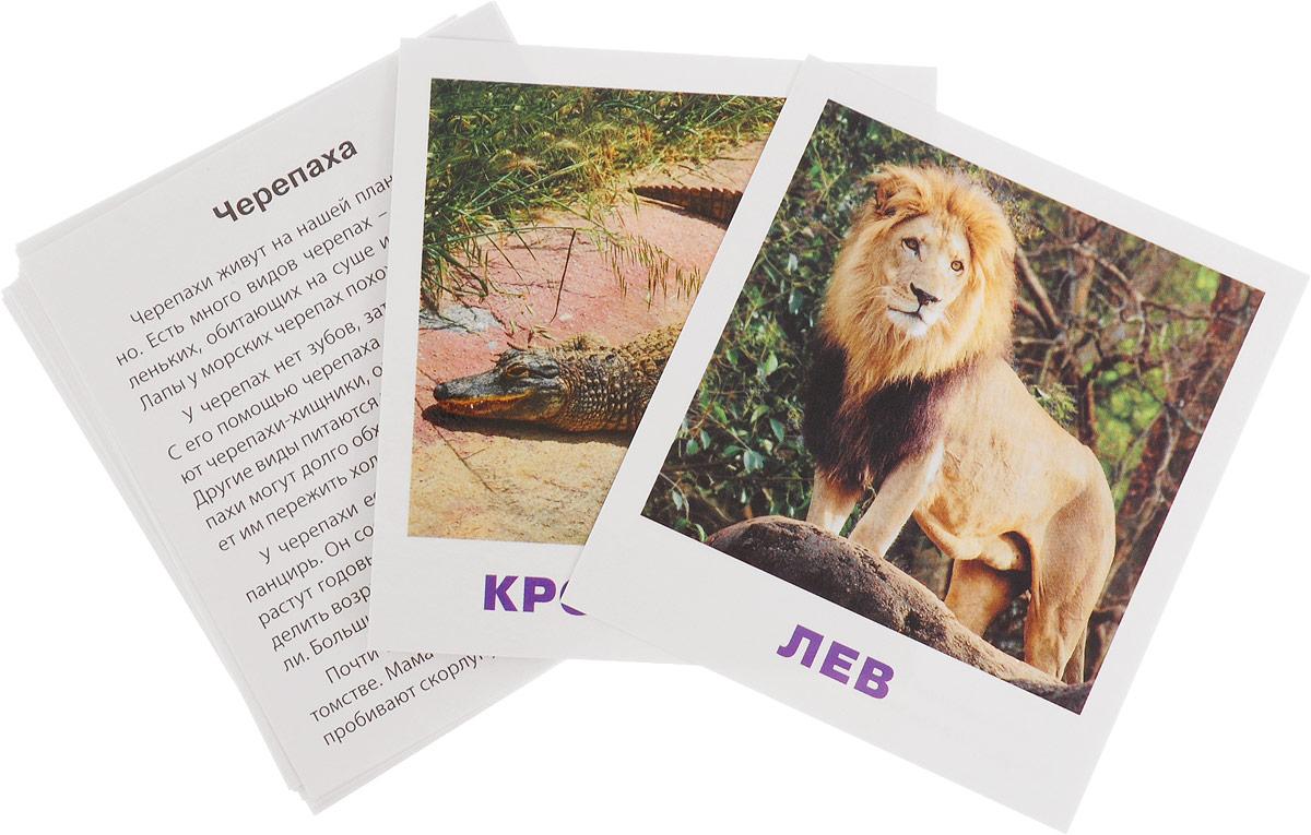 Айрис-пресс IQ-малыш Обучающие карточки Животные жарких стран набор для игры карточная айрис пресс iq карточки развиваем мышление 25624