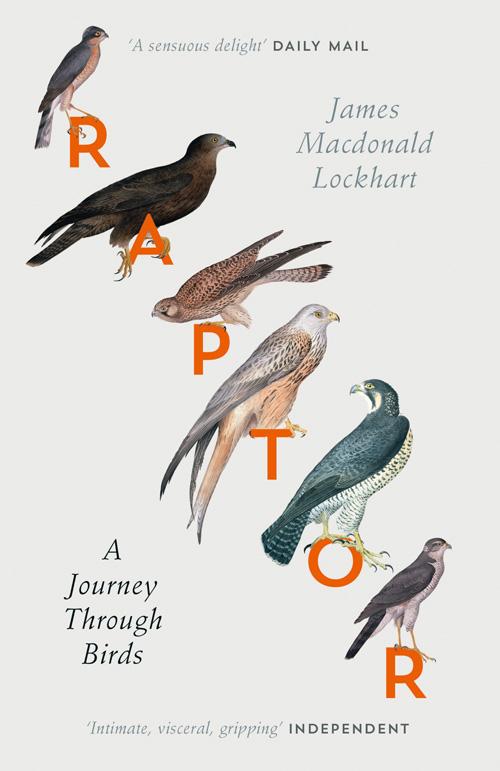 RAPTOR: A Journey Through Birds morais r the hundred foot journey