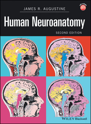 Human Neuroanatomy writing down the bones freeing the writer within 2nd edition