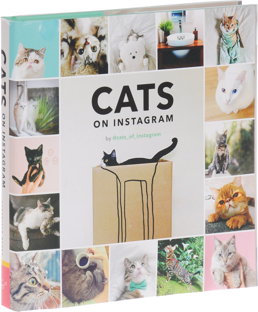 Cats on Instagram cats on instagram