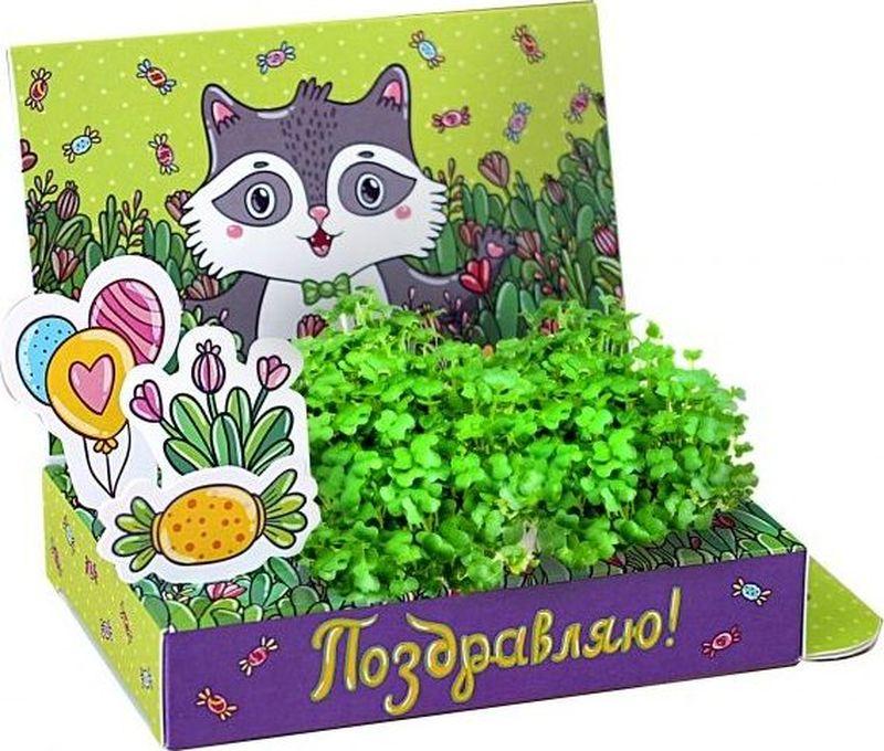 Happy PlantНабор для выращивания Поздравляю Енот ООО