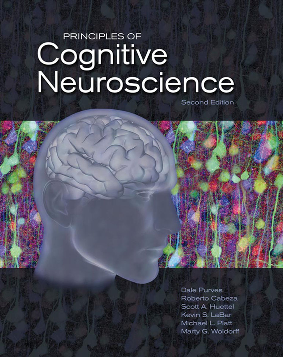 Principles of Cognitive Neuroscience principles of neural science