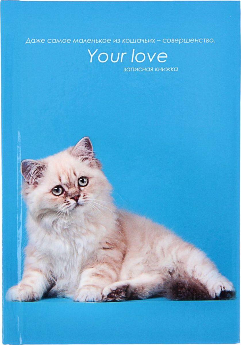 Проф-Пресс Записная книжка Белая кошка на голубом 48 листов