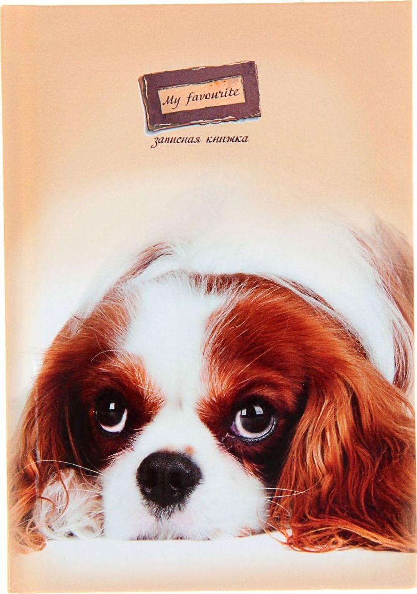 Проф-Пресс Записная книжка Пушистый щенок 48 листов1211535Записная книжка — компактное и практичное полиграфическое изделие, предназначенное для разного рода записей и заметок.Такой предмет прекрасно подойдёт для фиксации повседневных дел. Это канцелярское изделие отличается красочным оформлением и придётся по душе как взрослому, так и ребёнку. Записная книжка твёрдая обложка А6, 48 листов Пушистый щенок, глянцевая ламинация обладает всеми необходимыми характеристиками, чтобы стать вашим полноценным помощником на каждый день.
