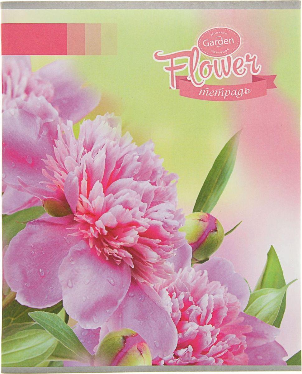 Апплика Тетрадь Розовые пионы 48 листов в клетку2369577