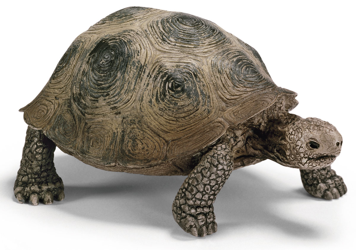 Schleich Фигурка Гигантская черепаха schleich фигурка карликовый козел