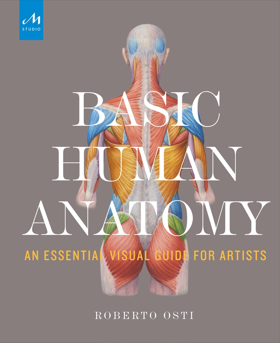 Basic Human Anatomy human medicine anorectal anal anatomy of the digestive system model anorectal surgery