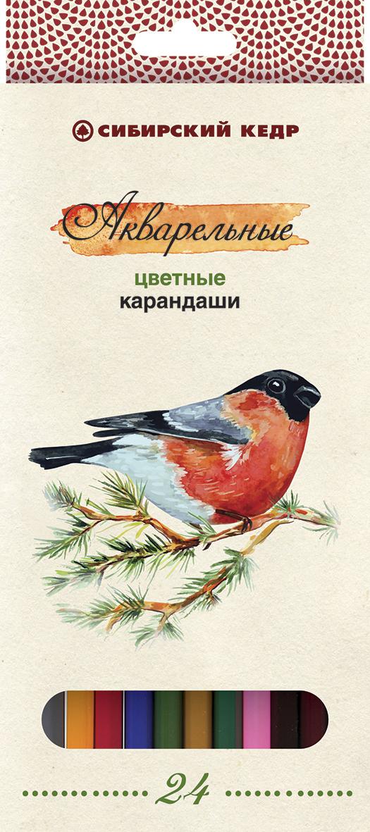 СКФ Набор акварельных карандашей Сибирский кедр Птицы Сибири 24 шт