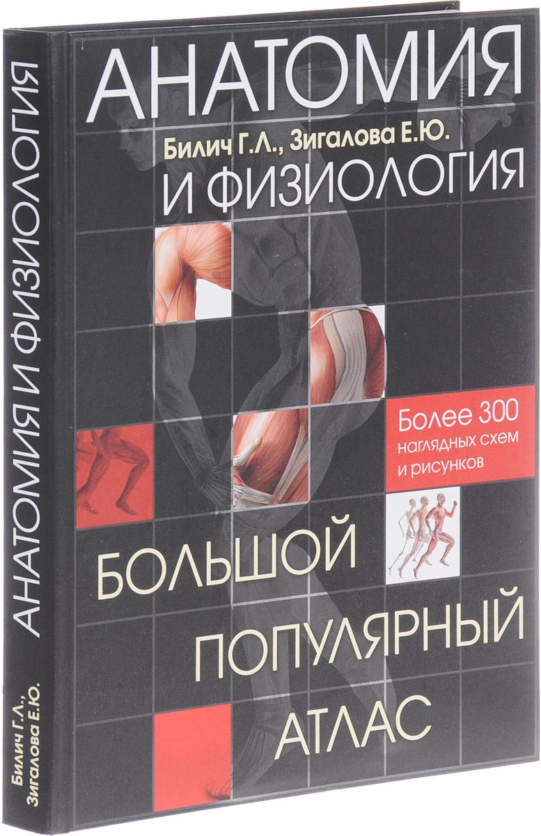 Г. Л. Билич, Е. Ю. Зигалова Анатомия и физиология. Большой популярный атлас г л билич е ю зигалова биология для поступающих в вузы