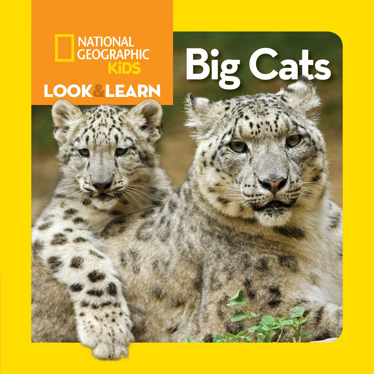 National Geographic Kids Look and Learn: Big Cats look and learn dig