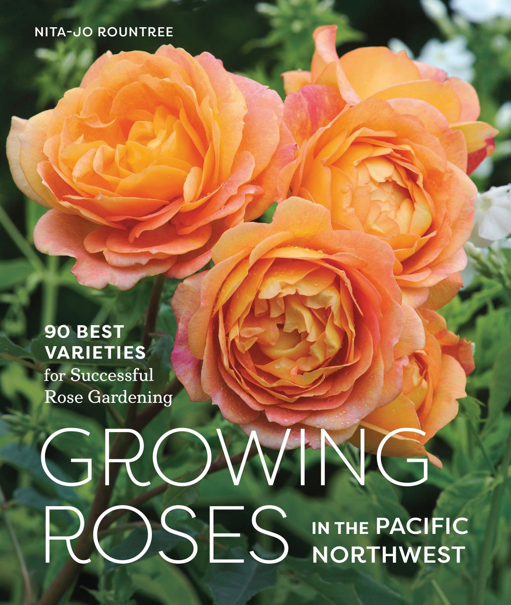 Growing Roses in the Pacific Northwest the roses of no man s land