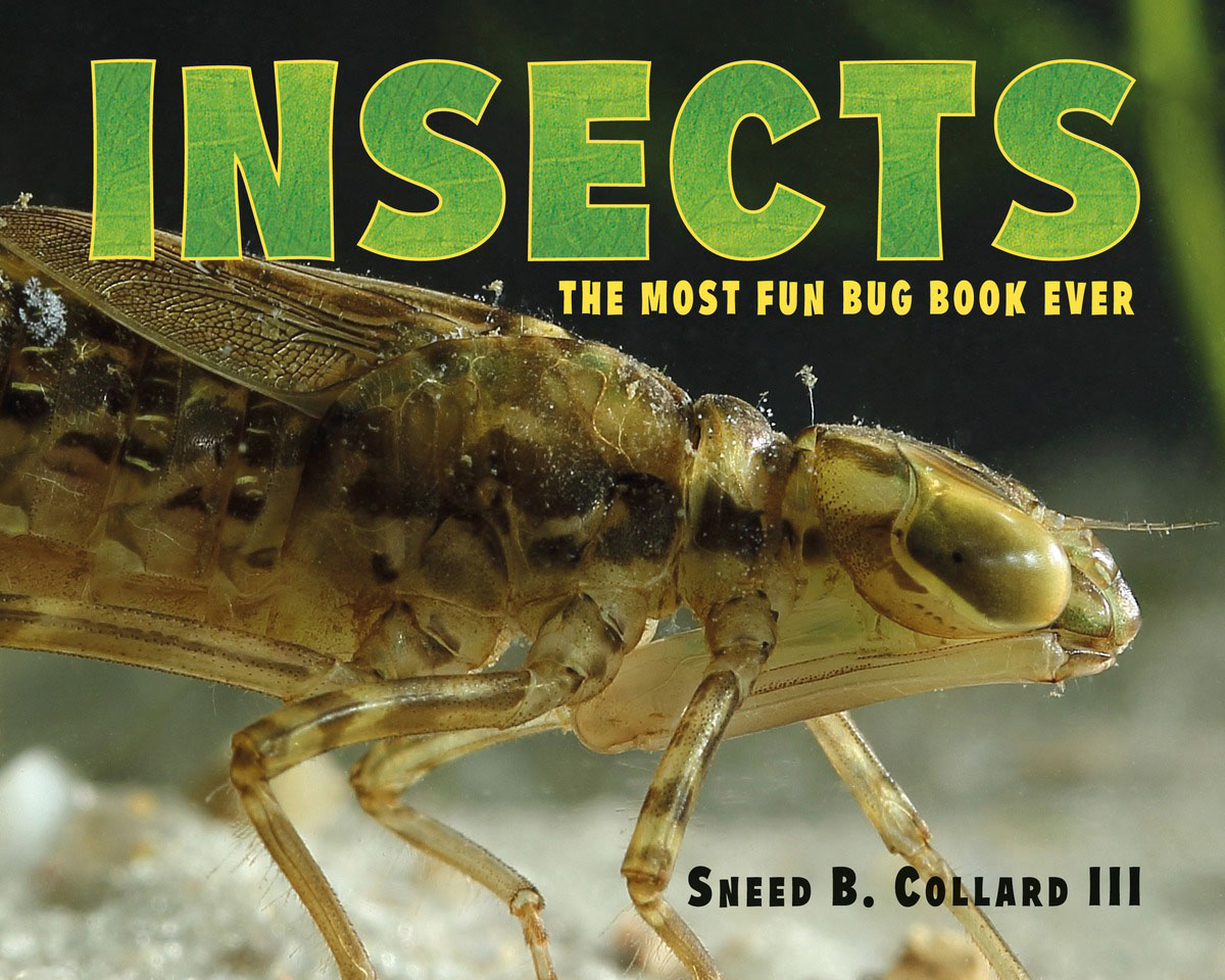 Insects secret weapons – defenses of insects spiders scorpions and other many–legged creatures