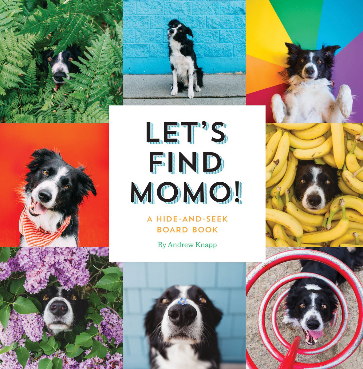 Let's Find Momo! feel and find fun building site