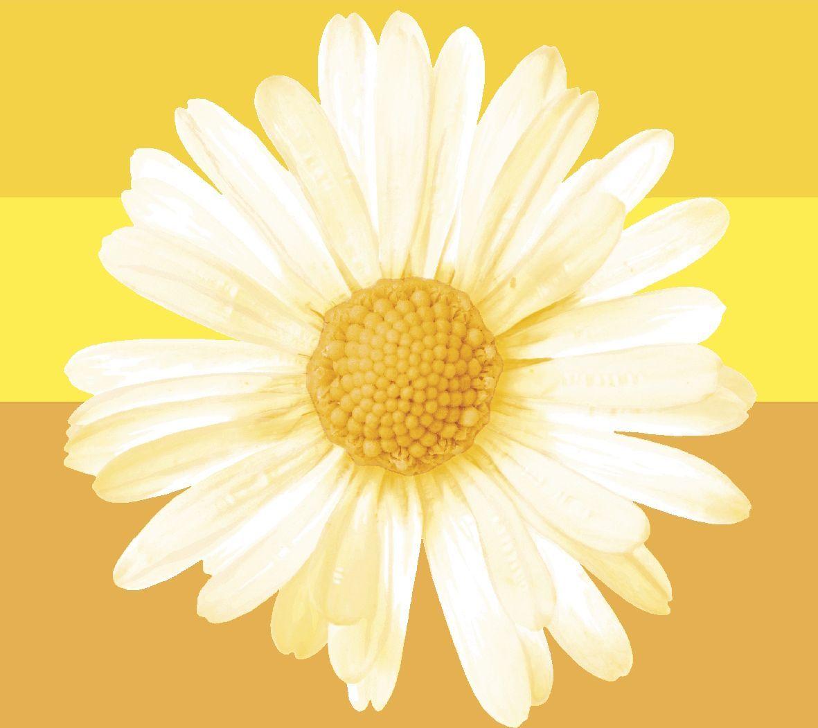 Салфетки бумажные Duni, 3-слойные, цвет: желтый, 24 х 24 см, 20 шт162709Трехслойные бумажные салфетки изготовлены из экологически чистого, высококачественного сырья - 100% целлюлозы. Салфетки выполнены в оригинальном и современном стиле, прекрасно сочетаются с любым интерьером и всегда будут прекрасным и незаменимым украшением стола.