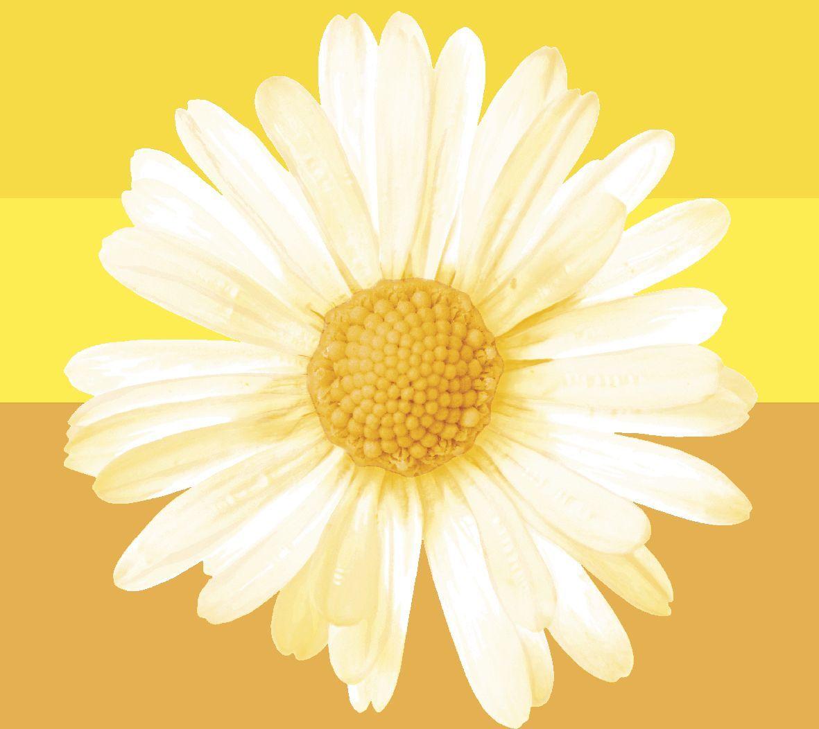 Салфетки бумажные Duni, 3-слойные, цвет: желтый, 33 х 33 см162722Трехслойные бумажные салфетки изготовлены из экологически чистого, высококачественного сырья - 100% целлюлозы. Салфетки выполнены в оригинальном и современном стиле, прекрасно сочетаются с любым интерьером и всегда будут прекрасным и незаменимым украшением стола.